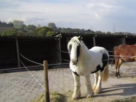 Haltung der Pferde auf der Winiranch