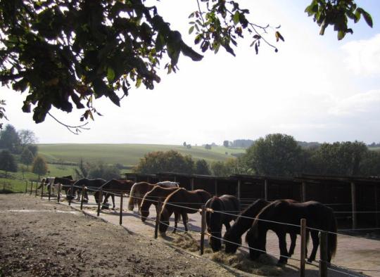Pferde auf der Winiranch